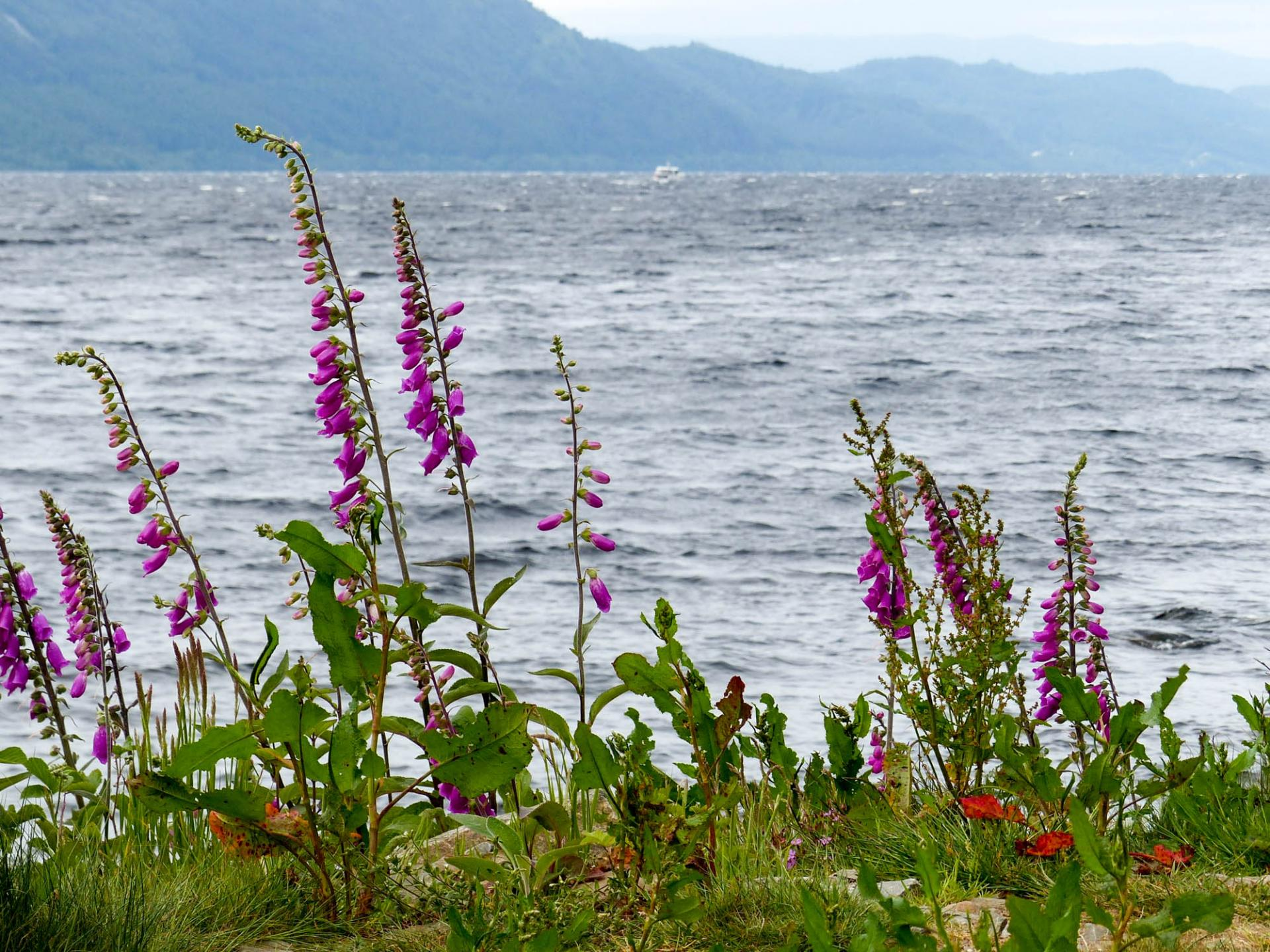 24 Le Loch Ness